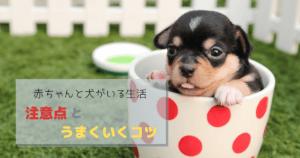 赤ちゃんと犬がいる生活