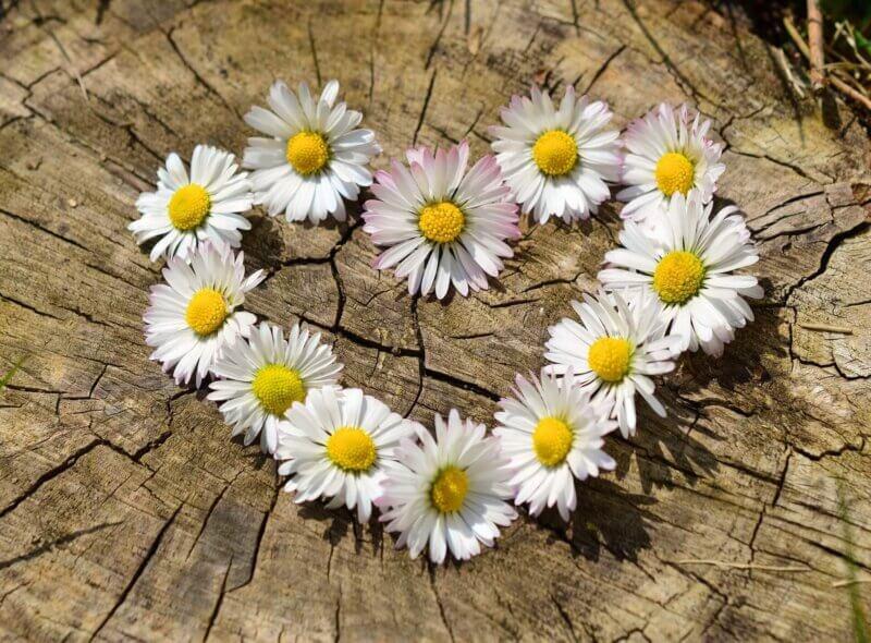 bloomee お花の定期便