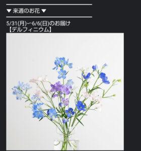 ひとはなお花の定期便のメルマガ画像